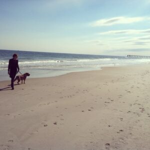 Hampton Roads Dog Training offers the best dog training in Virginia Beach and Norfolk